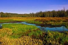 Stutsmanville Road Bog (snapstill studio) Tags: michigan bog harborsprings petoskey martinmcreynolds stutsmanvilleroadbog