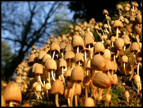 Mushrooms attack!