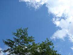 clouds... sky... tree (ecker) Tags: sky tree clouds ilovenature branches himmel wolken alm leafs bltter baum zweige dern oedern dernalm oedernalm