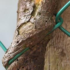 fWeOnOcDe (leo59) Tags: wood amsterdam fence square leo59 sq hout photohunt hek tangled 060821