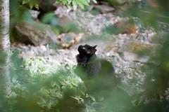 _mg_4150.jpg (ocean yamaha) Tags: cats biddy kirlianphotography