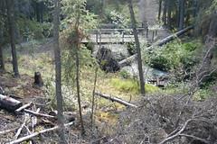 DSC_0242 (usbhub27) Tags: trail yukon boreal