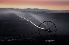 Sprinkler wheels at sunset (ue06) Tags: california county sunset water field woodland bravo wheels conservation farmland sprinkler crop watershed sacramento agriculture davis solano soe irrigation yolocounty centralvalley watering flatlands cachecreek flatlander putahcreek yolo specland sfchronicle96hrs abigfave nearroad27 beforeitallturnsintonewhousingdevelopments waterissues sprinklerwheels