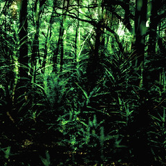 """it's a jungle out there... • <a style=""""font-size:0.8em;"""" href=""""http://www.flickr.com/photos/53627666@N00/243428567/"""" target=""""_blank"""">View on Flickr</a>"""