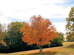 colors (miamitj) Tags: color fall atumn