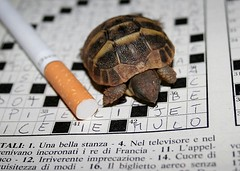 tiny turtle (fazen) Tags: macro animal puppy dof little turtle reptile cigarette tiny