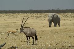 Etosha National Park - by tim ellis