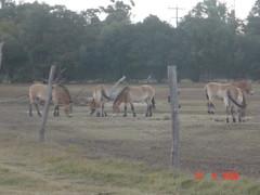 DSC06358 (Nguyen Ha Hai) Tags: werribee vườn thú