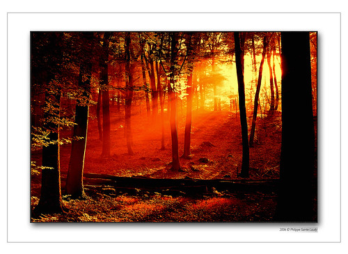 Forest in the morning 2