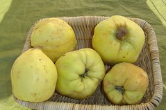 Quinces (jespahjoy) Tags: quince coing