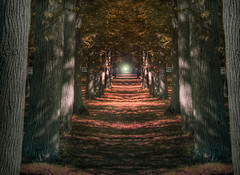 tunnel of trees (richietown) Tags: park autumn trees fall topf25 topv111 topv2222 interestingness topf50 topv555 topv333 topf75 topv1111 stock topv999 interestingness1 explore topv5555 getty topv777 parallax topv9999 topv11111 topf125 topf150 topv3333 topv4444 topf100 hdr topf250 topf200 28135mm bostonist topv8888 topv6666 topv7777 larsanderson topf175 photomatix topf225 interestingness001 universalhub explore1 bostonphotos explorenumber1 bostonphotographer richietown exlpore1 topexplore bostonphotography bostonphoto bostonphotographs