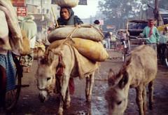 Hardship in the streets of Varanasi (India)