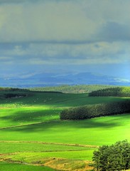 Strathmore Valley View (Magdalen Green Photography) Tags: trees green castle nature rural ilovenature scotland bravo peace view sheep angus scottish fields iain strathmore hdr ecosse glamis exploretop20 p1f1