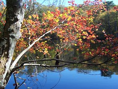 Foliage at Ames Pond (meganmcarroll) Tags: bestnaturetnc06 amespond