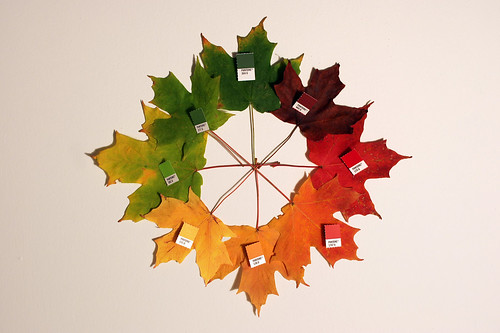 pantone autumn / Chris Glass
