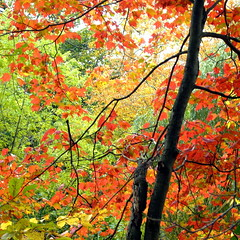 Bright October (Musical Mint) Tags: autumn trees orange colour green fall nature yellow october highpark bright colourful musicalmint
