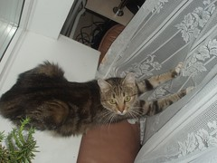 Zhuzha (Marcus Vegas) Tags: cat geotagged oops atheletics zhuzha geo:tool=gmif geo:lat=59374829 geo:lon=24710451