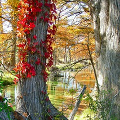 Cypress Creek (Terry_Lea) Tags: autumn leaves texas quality cypresscreek abigfave