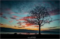 Colored sky (Hanspeter Ryser) Tags: sempachersee lake color colored skywasser abend vogelang swiss switzerland sonenuntergan sunset europa sonnenschein hanspeterryser