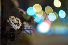 Minolta MD Rokkor 50mm f 1.4 - DSCF4038 (::nicolas ferrand simonnot::) Tags: minolta md rokkor 50 mm f 14 1977   6 blades apperture mount paris 2018 bokeh depth field color vintage manual classic japanese fixed length prime lens profondeur de champ flower close up macro yellow purpple extérieur wideopen wide open rès belle le traitement est superbe fleur brillant night light 50mm