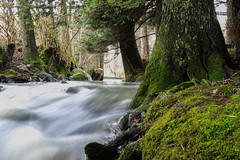 River (joel.antille) Tags: river forest three