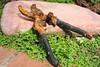 Garden Pruners (chad_shahin) Tags: handtools flickrfriday gardening gardenning shear shears prunning garden rust