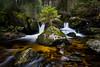 Spring Sapling (beatriceverez) Tags: sapling spring nature landscape forest sudschwarzwald blackforest longexposure rocks moss