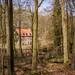 Forêt de Soignes - Zoniënwoud