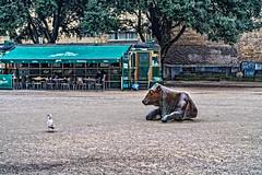 BRONZE COW OUTSIDE THE TRAM CAFE [WOLFE TONE SQUARE]-137904 (infomatique) Tags: publicart tramcafe agcrúnagréine enjoyingthesun jackiemckenna bronzecow sculpture williammurphy infomatique fotonique ireland publicpark publicsquare