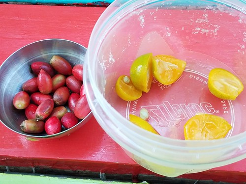 Miracle fruit tasting (with calamondin) at trivia