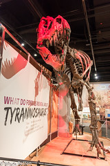 180324 Washington-16.jpg (Bruce Batten) Tags: shadows usa museums trips occasions subjects reptiles locations animals vertebrates businessresearchtrips washingtondc dinosaurs washington districtofcolumbia unitedstates us