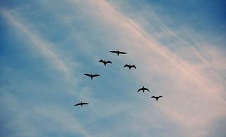 Stormo (birds)