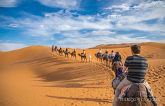 "Sahara | TrinDiego (TrinDiego) Tags: morocco trindiego sahara desert camel sand trek camp berber almamlakahalmaghribiyah ""western kingdomالمَغرِبⵍⵎⵖⵔⵉⴱ مرزوقة الصحراء merzouga صحراء northafrica africa المملكةالمغربية kingdomofmorocco ⵜⴰⴳⵍⴷⵉⵜⵏⵍⵎⵖⵔⵉⴱ almaġrib"