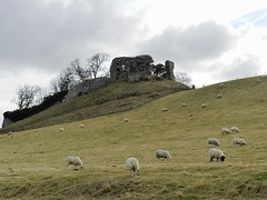 Skelbo Castle, near Dornoch, Sutherland, March 2018 (allanmaciver) Tags: skelbo castle sutherland east coast scotland ruin fort fortress sheep farmer clouds grey trees march cool day height loch fleet allanmaciver