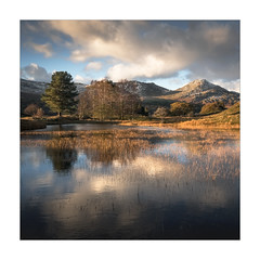 Kelly Hall Tarn - in explore (Dave Fieldhouse Photography) Tags: evening sunset dusk kellyhalltarn tarn lake lakedistrict lakes lakeland cumbria nationalpark theoldmanofconiston cumbrianmountains fells mountains autumn weather clouds reflections reeds grasses trees squarecrop square fuji fujixt2 fujifilm wwwdavefieldhousephotographycom outdoors countryside greatbritain england