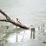 still life on ice thumbnail
