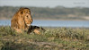 Male Lion at Rest (Raymond J Barlow) Tags: tanzania phototours wildlife lion travel adventure raymondbarlow workshop