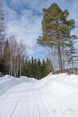 The road outside (atranswe) Tags: dsc4048 sweden sverige västernorrland ångermanland väja grannskap neighborhood latn62°5818lone17°427 birch björk gran spruce winter midday eftermiddag snow snö brantbacke hill atranswe
