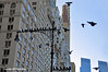 Pigeons Of New York (Trish Mayo) Tags: birds pigeons lamppost