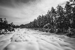 snow covered Lacey, NJ (primemundo) Tags: dogwood dogwood2018 leadinglines snow snowcovered pines pinebarrens lacey nj newjersey landscape cotton