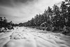 snow covered Lacey, NJ (primemundo) Tags: dogwood dogwood2018 leadinglines snow snowcovered pines pinebarrens lacey nj newjersey landscape cotton