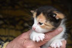 Fortunata (Mara Miao) Tags: gatti cats animals nature lucky animali pets puppy kitten