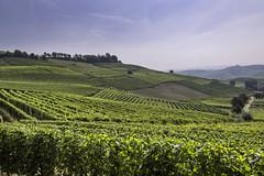 Terre del Barolo_Y3A9429 (candido33) Tags: barolo lamorra paesaggidelvino piemonte serradenari alba aurora filari vigne vigneti vitigni