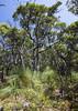 Day 3 007 clifftop vegetation (arcsystems) Tags: greatoceanwalk victoria 12apostles