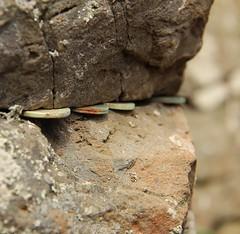 Causeway coins (tinamjones1948) Tags: stone coins rust giantscauseway organpipes antrim northern ireland basalt