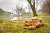 Mating time (Michele Remonti) Tags: mating common toad bufobufo bufo rospo comune accoppiamento pentax fisheye pentaxda1017fisheye