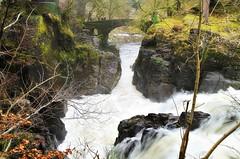 The Black Linn Falls (eric robb niven) Tags: ericrobbniven scotland riverbraan waterfall dunkeld landscape