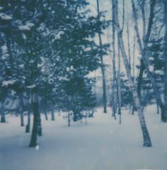 """Blue Winter (dreamscapesxx) Tags: instant polaroid """"polaroidspirit600"""" """"polaroidoriginals600film"""" inthebackyard blue winter wintry snow snowy snowflakes snowfall barrytonmi polavoid snapitseeit"""
