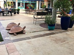 Sonoran Desert Tortoses Heading Upstream at Tucson's La Encantada Mall (Chic Bee) Tags: america americansouthwest arizona elevator laencantadamall sonorandesert southwesternusa tilt tortoses tucson upstream