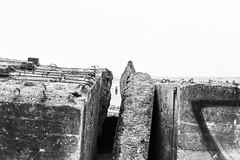 (Feininger's Cat (Thanks for 1.3 million views!)) Tags: meinfilmlab bessar3m summaritm50mmf24 leica 50mmffequiv film abandoned ilforddelta100 bunker løkken jylland blackandwhite danmark scandinavia denmark jutland skandinavien furreby analog fullframe leicasummaritm12450 summarit summarit50 50mm leicam rangefinder messsucher